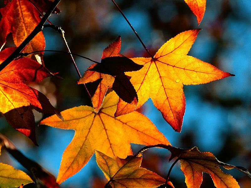 Versek óvodás gyerekeknek, őszi mondókák