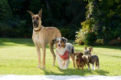 Marmaduke - A kutyakomédia (mozi)